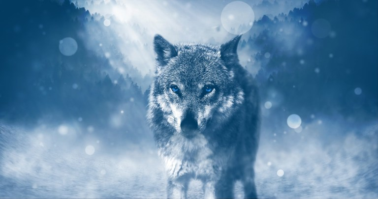 DREAMS ABOUT ANIMALS – MEANING AND INTERPRETATION