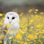PROPHETIC AND SPIRITUAL MEANING OF OWLS