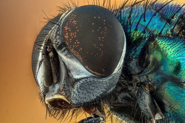 What Does It Mean When You Dream About Insects?