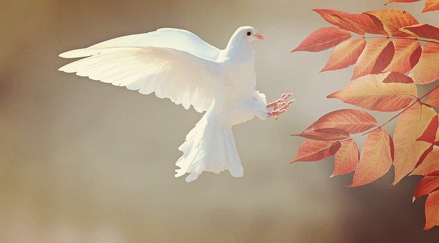 SPIRITUAL MEANING OF BIRDS IN THE BIBLE