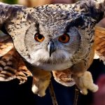 What Does It Mean To Dream Of An Owl?