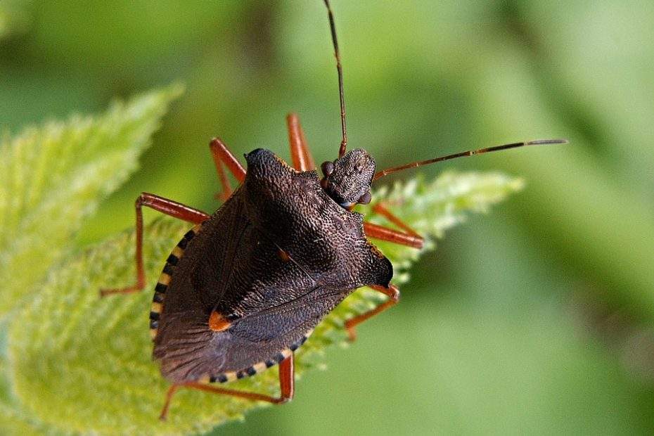 What Does It Mean When You Dream About Bugs