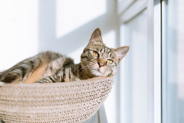 how to treat a cat uti at home