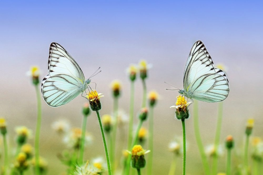 Butterfly Meaning In The Bible
